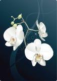 Les fleurs blanches Images stock