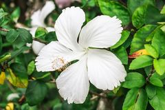 Les fleurs blanches Photo stock