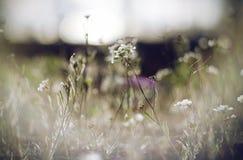 Les fleurs blanches de ressort ont enveloppé dans un brouillard photos libres de droits