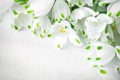 Les fleurs blanches du lis de Loddon se trouvent sur les conseils en bois blancs Images libres de droits