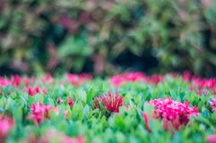 Les fleurs clouent sur le fond de tache floue Images libres de droits