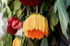 Les fleurs colorées étonnantes de ressort se fanent Photographie stock libre de droits