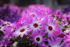 Les fleurs colorées de jardin se ferment vers le haut du macro tir photos libres de droits