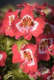 Les fleurs colorées de jardin se ferment vers le haut du macro tir photo libre de droits