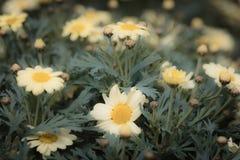 Les fleurs colorées de jardin se ferment vers le haut du macro tir photo stock