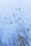 les fleurs couvertes glacent des cheminées Photographie stock