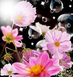 Les fleurs décoratives d'été de jardin Photographie stock libre de droits