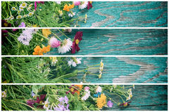 Les fleurs d'été raillent  Photos stock
