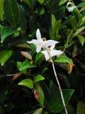 Les fleurs d'orchidée de blanc photographie stock libre de droits