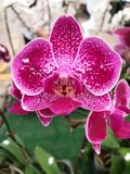 Les fleurs d'orchidée sont très populaires et colorées image stock
