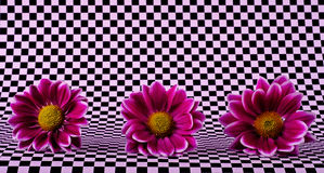 Les fleurs dans des échecs Photos stock