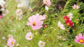 Les fleurs dans Gyeongju, Corée du Sud photographie stock libre de droits