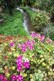 Les fleurs dans le lit et la crique dans la ville se garent, Schwabach, Allemagne Photos stock