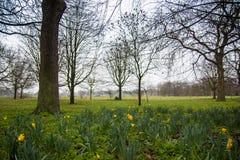 Les fleurs dans le ` s de régent se garent, Londres images stock