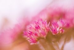 Les fleurs dans se sont levées Photographie stock libre de droits