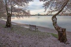 Les fleurs de cerisier encadrent Jefferson Memorial Photographie stock