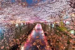 Les fleurs de cerisier ont rayé le canal de Meguro la nuit à Tokyo, Japon Spri Photos stock