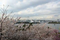 Les fleurs de cerisier sur le premier plan et le fond sont pont Japon en arc-en-ciel photographie stock libre de droits