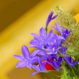 Les fleurs de champ du cognassier du Japon Thunb d'iris Image libre de droits