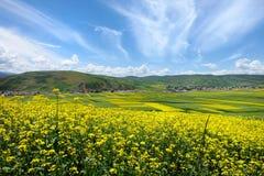Les fleurs de chou et le ciel bleu photographie stock libre de droits