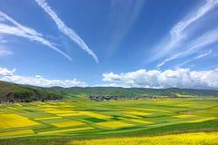 Les fleurs de chou et le ciel nuageux photographie stock libre de droits