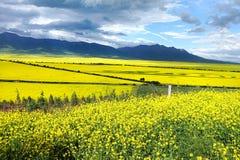 Les fleurs de chou et le ciel nuageux photographie stock