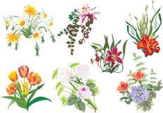 les fleurs de couleur ont placé Image libre de droits