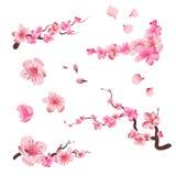 Les fleurs de floraison de cerise de Sakura de ressort, les pétales roses et l'ensemble de vecteur de branches pour vos propres m illustration de vecteur