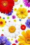 les fleurs de fond ont isolé le blanc d'été Photographie stock