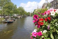 Les fleurs de la Hollande Images libres de droits