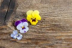 Les fleurs de pensée sur le fond en bois photo libre de droits