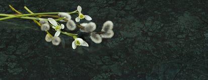 Les fleurs de perce-neige et les branches de saule sur Verde Guatemala marbrent s Photo stock