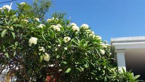 Les fleurs de peuvent photographie stock