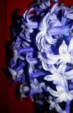 Les fleurs de pourpre de beauté photographie stock