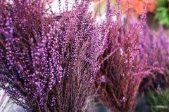 Les fleurs de pourpre et les feuilles vertes Photographie stock