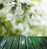 Les fleurs de ressort, feuilles de vert et vident le conseil en bois Photos stock