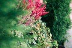 Les fleurs de rouge et les feuilles vertes Photo libre de droits