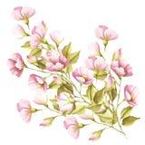 Les fleurs de sauvage se sont levées Illustration d'aquarelle Photos libres de droits