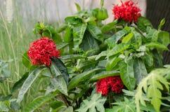 Les fleurs de transitoire sont pleine floraison images stock