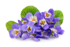 Fleurs de violettes Photo stock
