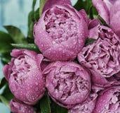 Les fleurs dentellent des pivoines dans les baisses de l'humidité Plan rapproché images libres de droits