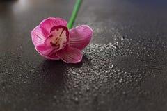 Les fleurs dentellent sur une obscurité en bois Images libres de droits