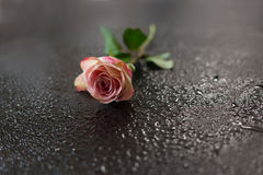 Les fleurs dentellent sur une obscurité en bois Photo libre de droits