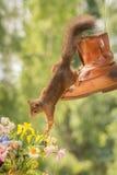 Les fleurs doivent sentir mieux Image libre de droits