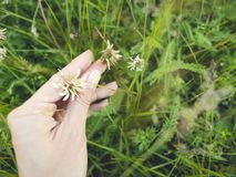 Les fleurs donnent à offre beau vert Photos stock