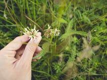 Les fleurs donnent à offre beau vert Image libre de droits