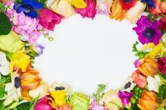 Les fleurs encadrent à l'arrière-plan blanc d'isolement Photographie stock