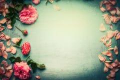 Les fleurs encadrent fait des roses roses avec des pétales et des feuilles sur le fond chic minable de turquoise Image libre de droits