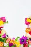 Les fleurs encadrent à l'arrière-plan blanc d'isolement Images libres de droits