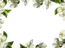 les fleurs encadrent le blanc png images stock